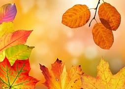autumn-1649362__180