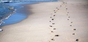 footprints-600743__340