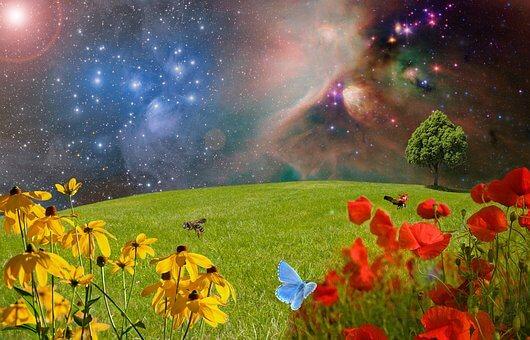 meadow-2401911__340
