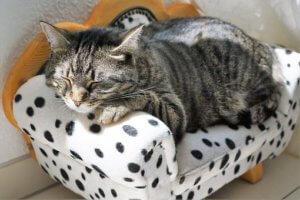 cat-2439113__340